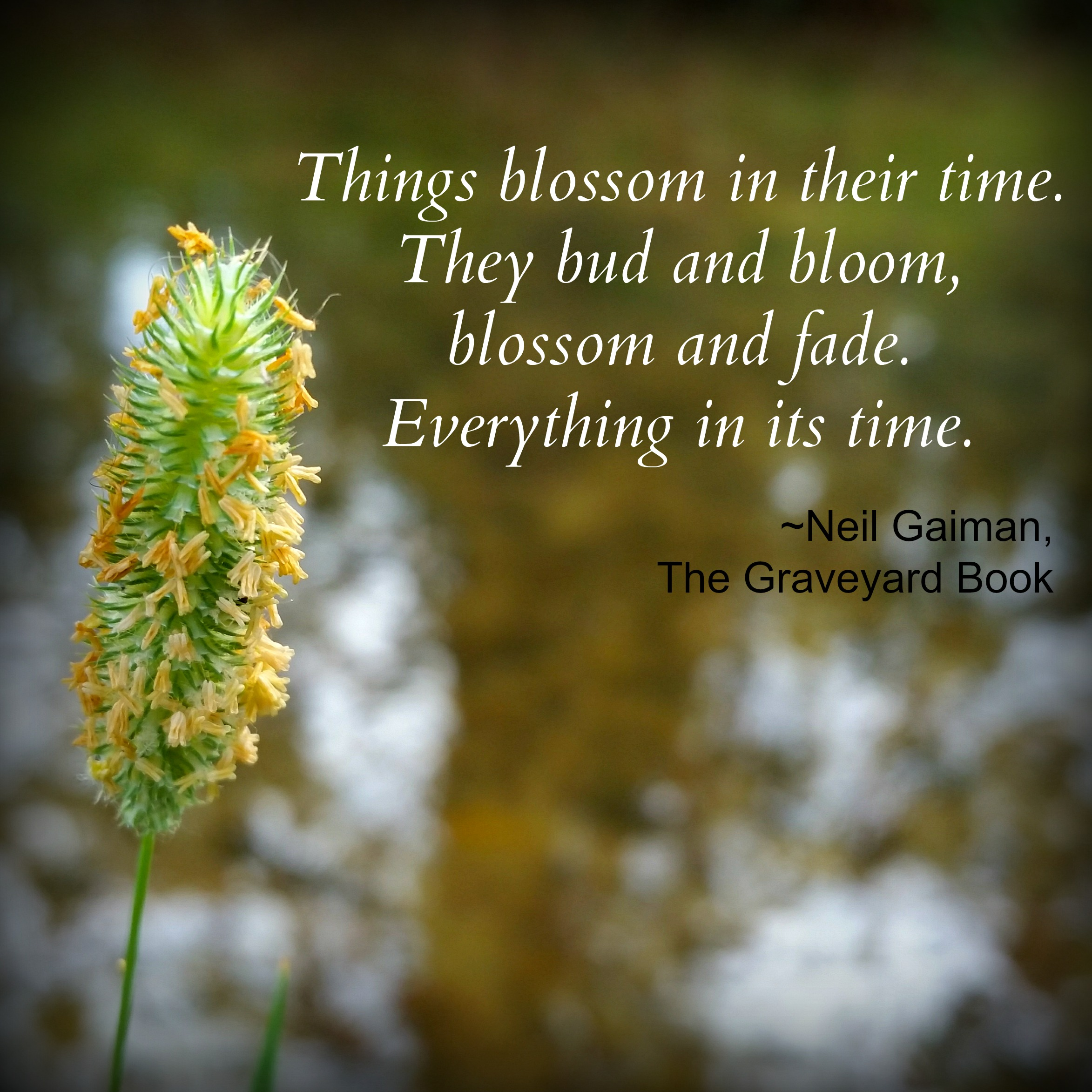 Things blossom in their time. They bud and bloom, blossom and fade. Everything in its time. ~Neil Gaimin | Musings on Ebb and Flow via DakotaMidnyght.com
